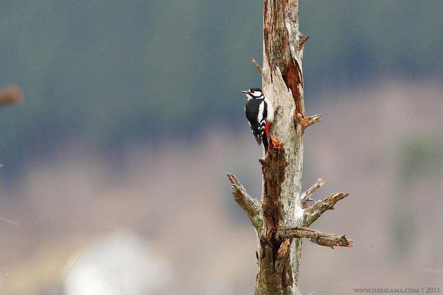 female agent cz velký ptáci